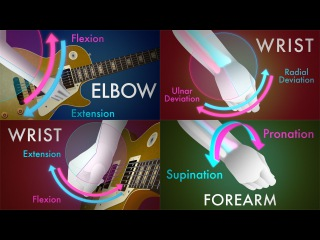 Guitar Anatomy: The Four Fundamental Movements Every Guitarist Should Know