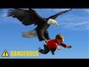 Eagle Attack Eagle vs Snake, Goat, Man, Wolf النسر يقاتل الافعى والذئب والمعزة
