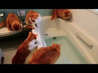 Банда рыжих котов в ванной охотится за игрушечной рыбкой. - YouTube 360p