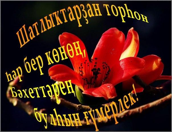 Поздравления с днем рождения на башкирском языке открытки, днем рождения