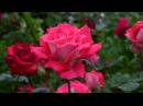 JANET TIFFANY'S BEAUTIFUL FLOWERS FOR YOU - ERNESTO CORTAZAR - JUST FOR YOU - LET'S TAKE A WALK