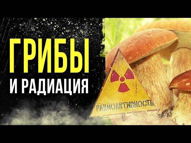 ☢ Радиация в грибах из леса. Цезий 137 в Былых, польских грибах и маслятах.