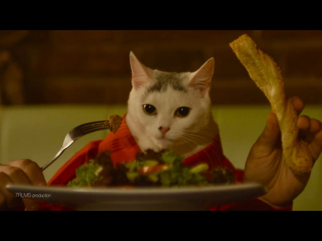 Вночі коти не сплять а… тусять Cat Cafe Lviv