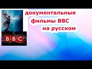 Удивительный фильм bbc Кошки и фараоны.Кошки и фараоны документатальные фильмы bbc