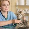 Ветеринарная клиника, лечебница, ветаптека
