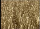 АГРОИНФОРМ Земли сельхозназначения Телеканал Россия 24 17 08 2013