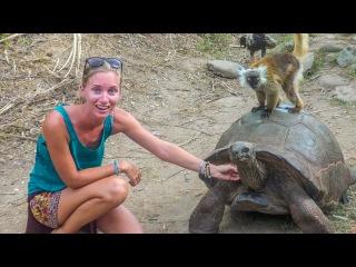 We're BACK! Lemurs, tortoise and SMILING FACES! Sailing Vessel Delos EP. 125