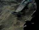 Клип-День Победы-Военные песни-Эх дороги 480p.mp4