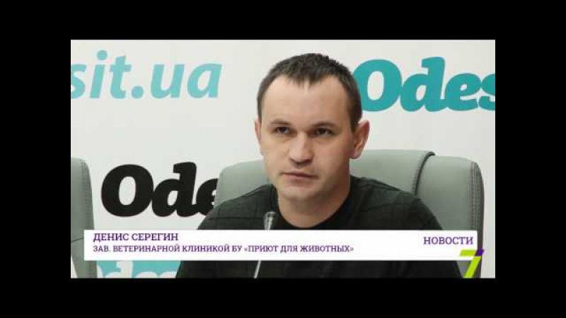 В этом году в Одессе отловили и простерилизовали около 3 тысяч бездомных животных