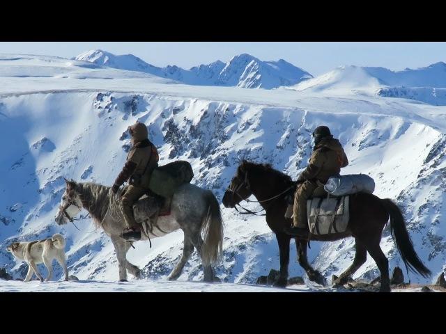 Зона покоя Укок СНЕЖНЫЙ БАРС в горах Южного Алтая Конная экспедиция в горы СИБИРИ Горный Алтай