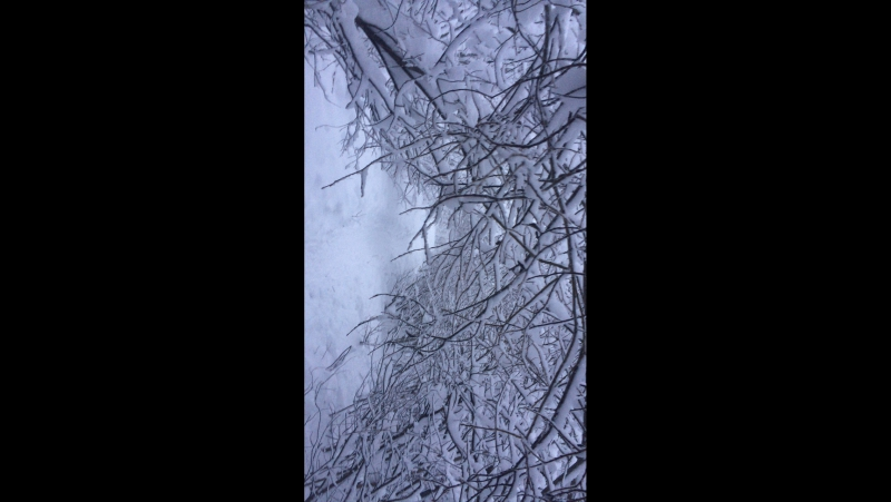 Дивный снежный лес