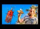 До какой степени я люблю всё живое? Встреча с паразитом (Red Palm Weevil) Алексей_Мартынов сыроедение фрукторианство raw