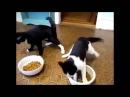 5 коротких смешных видео про животных