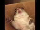 Белка песни не поёт и орешки не грызёт... Она ко сну готовится!!