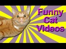 Funny Cat Videos - Dubstep Cat, Dancing Cats, Rapping Cat