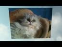 Посвящается нашей любимой кошке Лапе