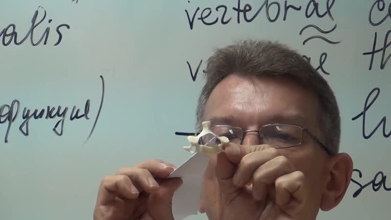 Видеоурок Анатомия позвоночного столба Строение позвонков проф В А Изранов