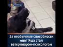 Новый сотрудник в ветеринарной клинике в Ростове-на-Дону стал звездой