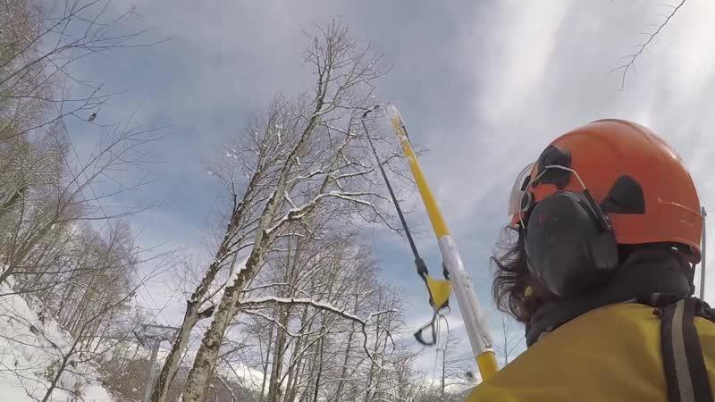 Кронирование деревьев с применением вертолета
