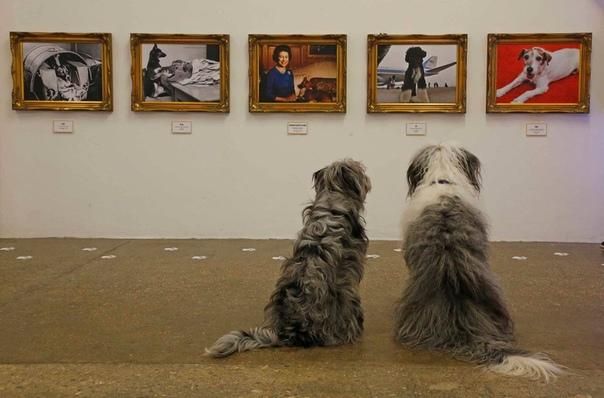 В Shoreditch открылась поп-арт галерея для собак с экспонатами, размещенными на уровне глаз животных.