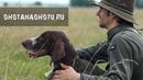 Охота с легавой Очень красивый фильм German Shorthaired Pointer in Russia Охота на Охоту