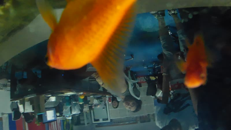 T5 body waterproof 4K action cam