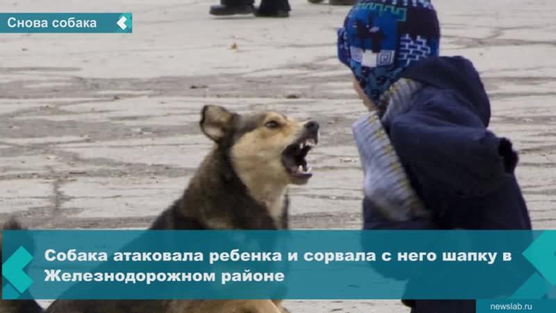 Собака напала на ребёнка в школьном дворе в Красноярске