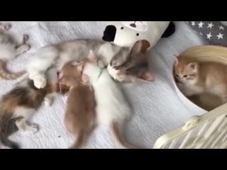 Кошки и котята. Самая милая подборка