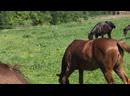 Ruffian Horse 2019