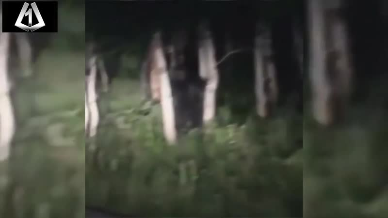 Couple Finds BIGFOOT Hiding In Utah Mountains