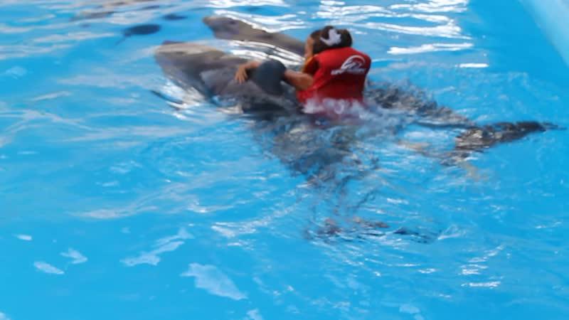 2011 6 лет Лиана плавает с дельфинами