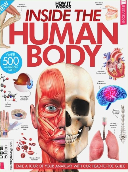 How It Works Inside the Human Body 3rd Edition