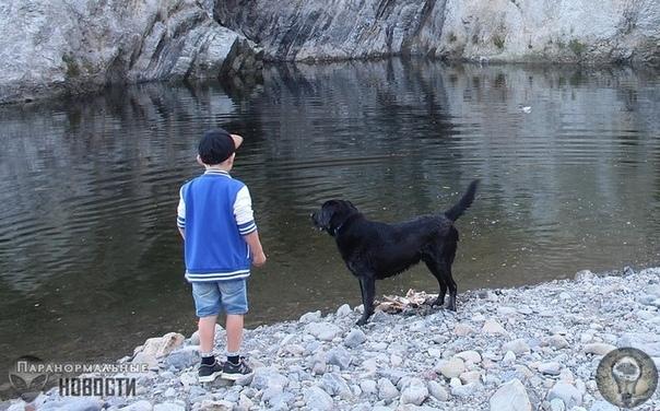 Странные воспоминания о собаке, которую на самом деле никто не видел Рассказывает пользователь сайта Reddit с ником ReverseShoplifter. Я схожу с ума или случилось что-то иное Я не религиозный