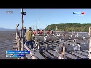 Прогноз на лососёвую путину