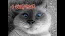 Приколы с котами С ОЗВУЧКОЙ – СМЕШНЫЕ ЖИВОТНЫЕ 2019 - ТЕСТ НА ПСИХИКУ - РЖАКА ДО СЛЁЗ - PSO