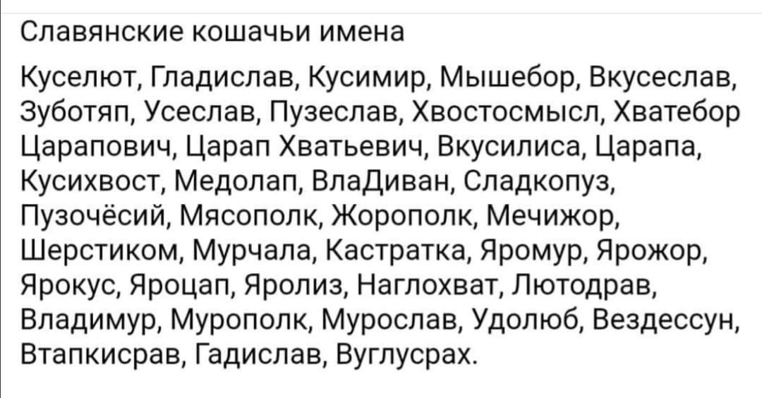 Славянские кошачьи имена