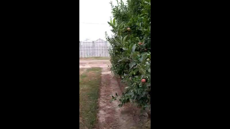 Сад яблоневый в Грозном