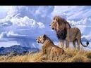 Nat Geo Wild .Короли убийства.Львы.Ягуары.Гепарды.
