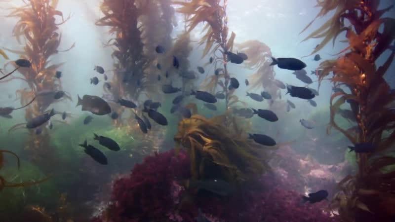 BBC Жизнь IV Рыбы
