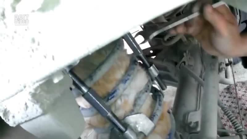 Кот застрял в амортизаторе и проехал свыше 50км
