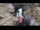 Сотрудники ИА ТСН24 разбираются в причинах гибели скота в Алексинском районе Тульской области. Видео