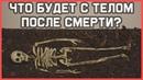 Edu Что произойдет с телом после смерти