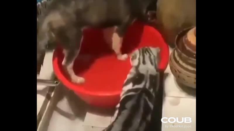 Успокойся, бестолочь!