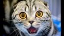 Смешные кошки приколы про кошек и котов 2016 2017 2018 25 Котята Котенки Котики