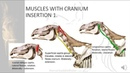 Equine Head Neck Muscles Horse Saddle Rider Course Kinetic Anatomy 2 2 1