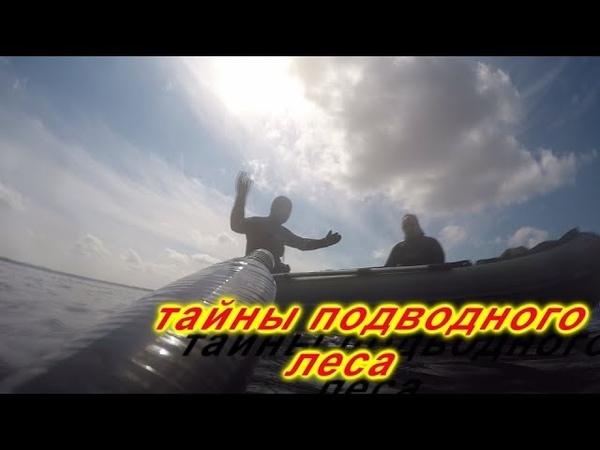 Подводная охота в КОРЯЖНИКЕ в низовьях Волги! Супер ПРОЗРАК!