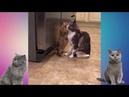 Приколы с кошками сборник Видео для ватсапа скачать бесплатно