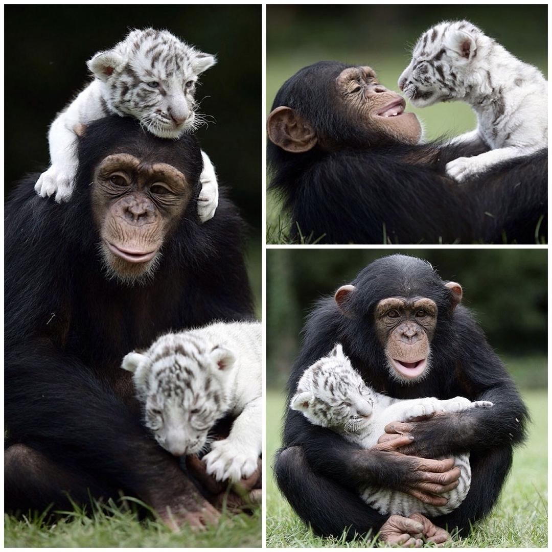 Просто удивительная дружба ☺