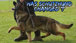 Has Schutzhund IPO Changed ? This is some Original footage from 80 years ago of doberman and GSD