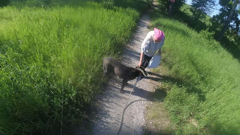 Мама грит что собаке надо есть траву
